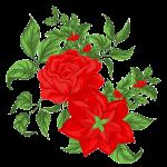 Image: Poinsettia