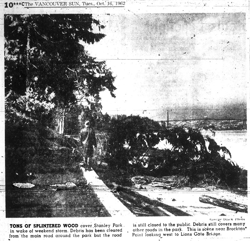 News photo showing damage to Stanley Park by Typhoon Freda. Vancouver Sun 16 October 1962