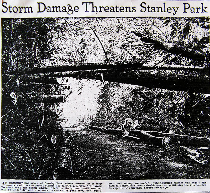 News photo showing storm damage to the Stanley Park forest. Province 8 February 1935