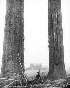 Douglas Firs in the West End, with the first Hotel Vancouver in the distance. Photo by William McFarlane Notman, McCord Museum #VIEW 1803.