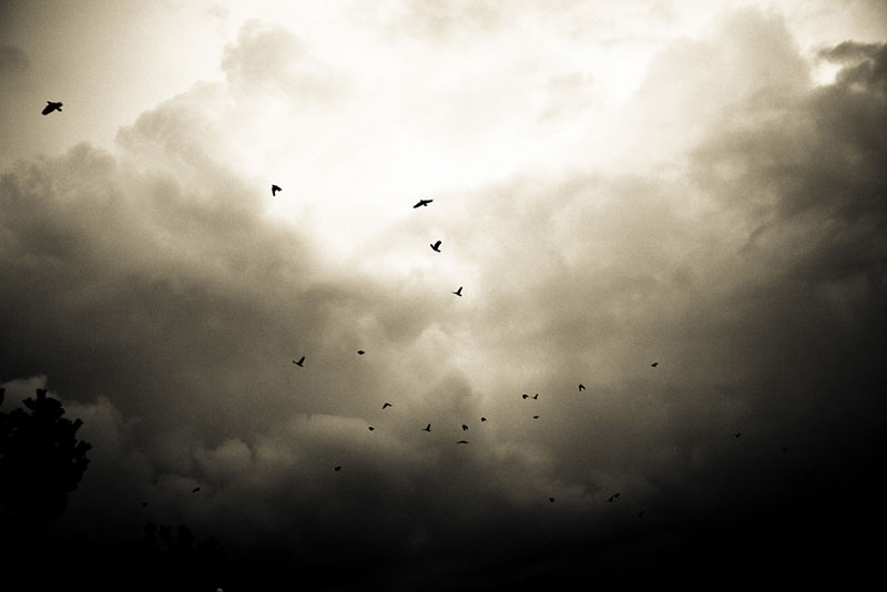 Crows on their daily commute over Vancouver. Photo from Flickr user Kenny Louie, cc by 2.0.