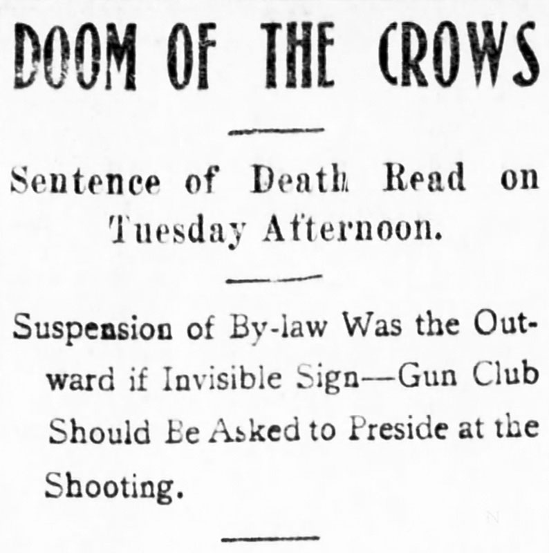 """""""Doom of the crows"""" headline from the Daily World, 28 August 1901."""