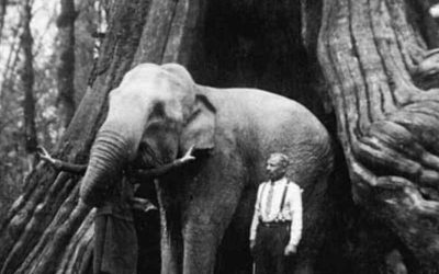 An elephant in the Hollow Tree at Stanley Park. Undated photo from Frank Gowen's Vancouver, 1914-1931 (Heritage House, 2001) [PNG Merlin Archive]